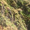 Inca_Trail_J2__30_