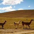 Altiplano_day_1__11_