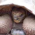 tortue geante des galapagos 2