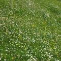 fleurs tableau impressionniste