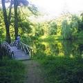 parc du château du roi Michel