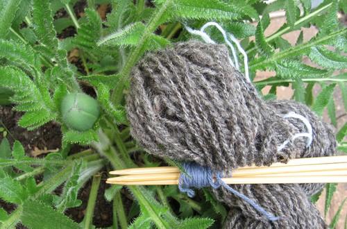 Poppy and handpsun wool
