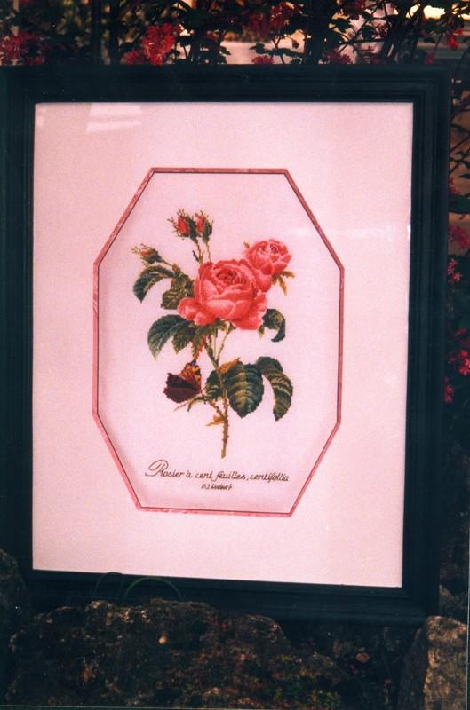 Rose redouté de Thea Gouverneur