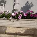fleurs2003_011