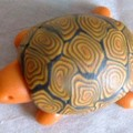 tortue aimant
