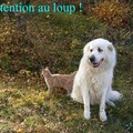 Attention_au_loup