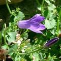 Fleurissime