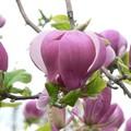 Escalade au programme pour prendre la fleur sur l'arbre