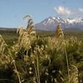 Mont Rupahue