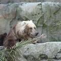 Et maintenant, visite du zoo