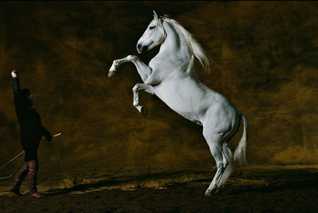 Cheval qui se cabre a dada for Fond ecran photo yann arthus bertrand