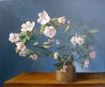 fleurs_de_poirier