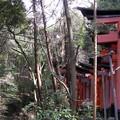 sanctuaire_fushimi_inari8