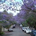 le_quartier_en_fleur