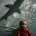 first sharks
