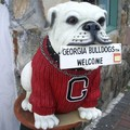 Georgia Bulldog : emblème équipe de foot
