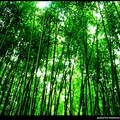 ANJI___quand_les_bambous_m_encerclent