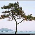 DALIAN___la_mer_cachee_derriere_l_arbre