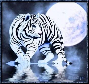 Jeu cherchez l 39 image forum page 27 - Tigre blanc dessin ...