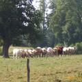 Mayenne...la balade nature