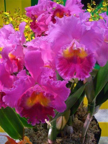 Orchidee_2006_02_19__22_