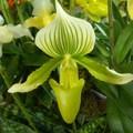 Orchidee_2006_02_19__80_1