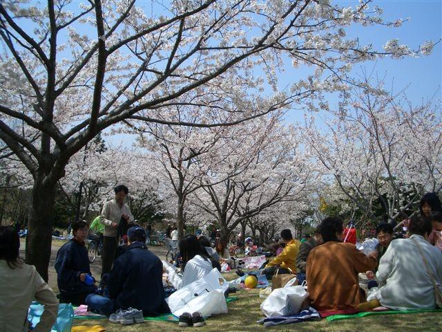 1er Avril 2006 Hanami