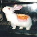 Test d'irritation : L'animal est rasé, puis sa peau et incisée. Dans les plaie sont appliqué les produits à tester (crème, parfum, etc.) Puis l'animal est laissé dans sa cage, sans soins, afin d'observer les lésions et leurs importances.