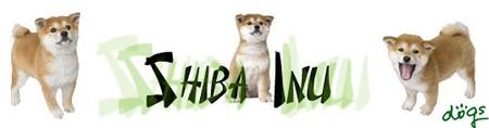 shiba_inu3