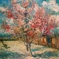 Vincent Van Gogh - Peschi-in-fiore 1888