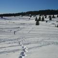 Ski de fond à Chamrousse