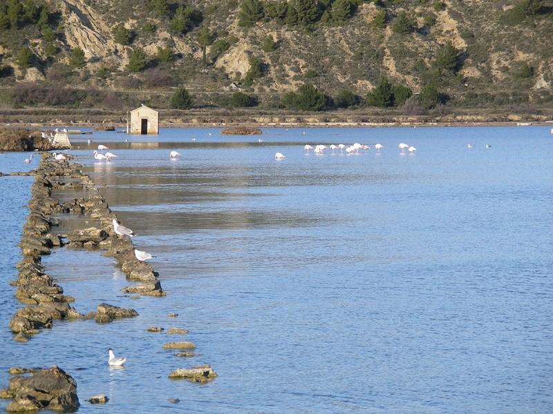 Etangs de Peyriac de Mer (11) Canards sauvages