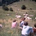 21 au milieu des moutons