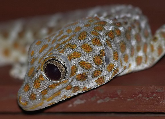 gecko_01_filtered