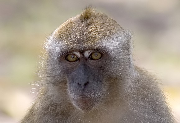 macaque_filtered