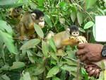 nos_amis_les_singes
