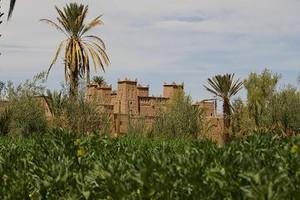 maroc__542_