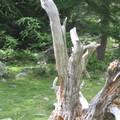 _tmp_arbre05