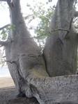 baobab_plage