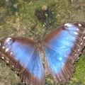 Naturospace d'Honfleur