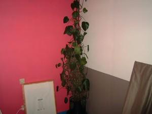chambre_coin_plante