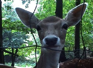 _users_karinele_desktop_bambi