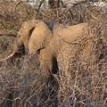 encore un elephant