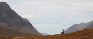 deer_in_the_glen