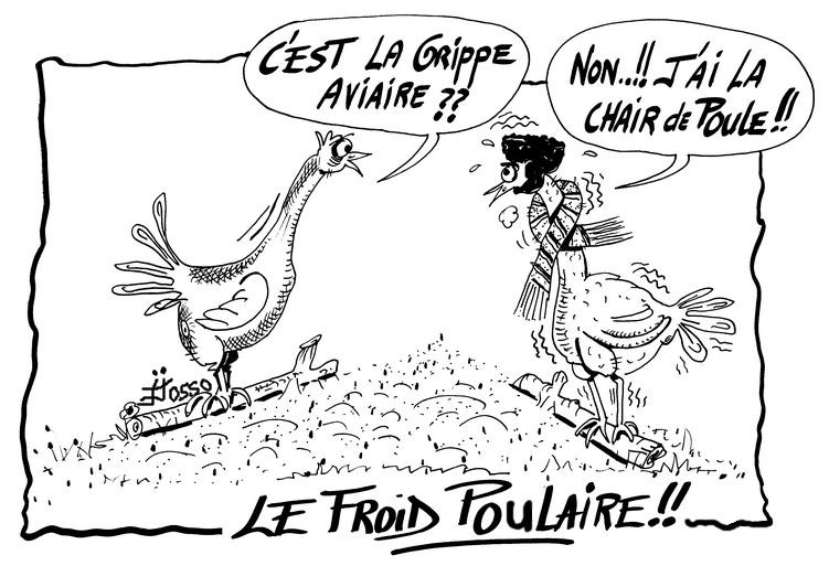 froid grippe aviaire