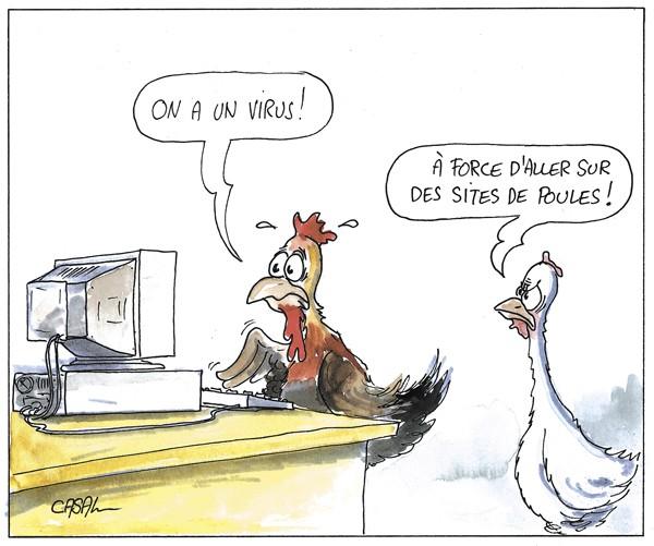 poule informatique