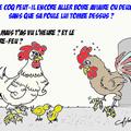 poules aviaire