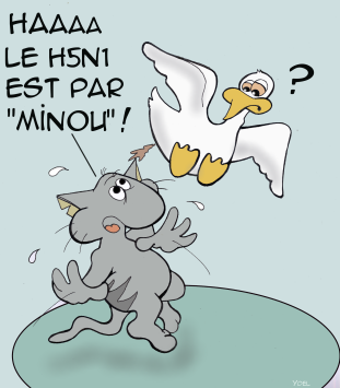 minou2
