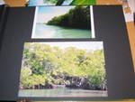 mangrove_avant_4