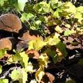 Bois_d_automne